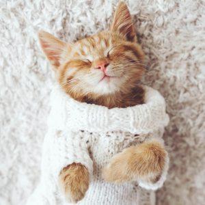 Cat on Carpet   Price Flooring